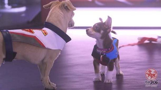 The Overwatch 'Puppy Rumble' celebrates the Year of the Dog with real dogs