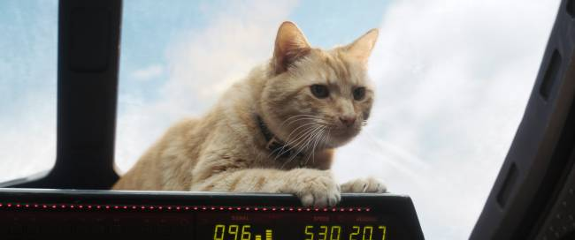 Why Everyone's Talking About Goose The Cat In Captain Marvel