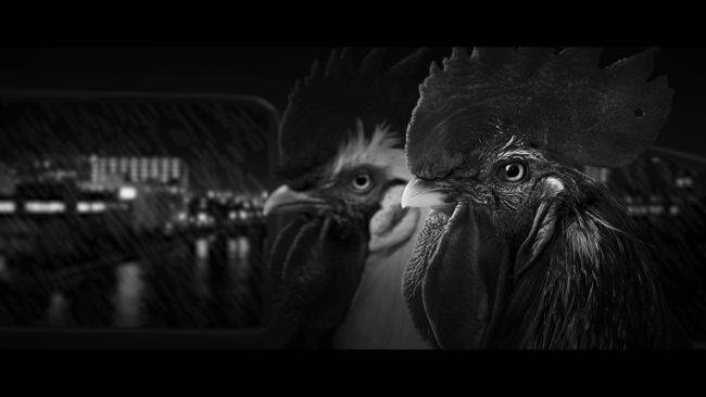Chicken Police, a noir adventure featuring crime-solving roosters, is out now