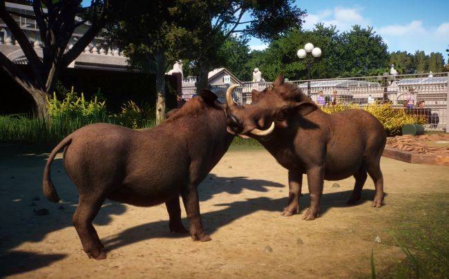 Planet Zoo's latest trailer shows off the upcoming beta's features